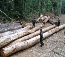 Desmatamentos na Amazônia atingem área equivalente a 11 cidades de São Paulo de agosto de 2018 a julho de 2019